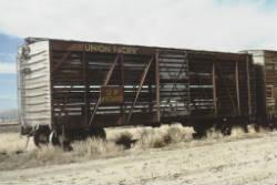 cattlecar_250