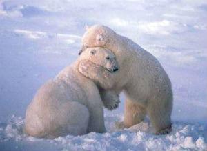 bear_hugs_300