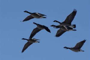 Birds2_300