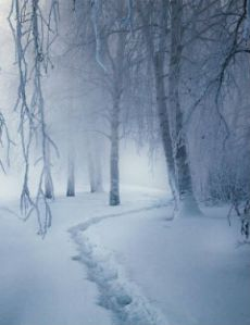 snow_300